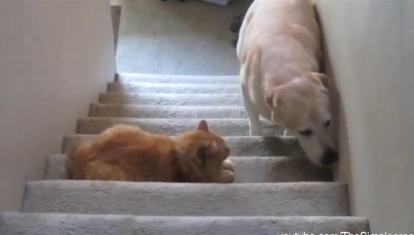 犬 猫 通せんぼ