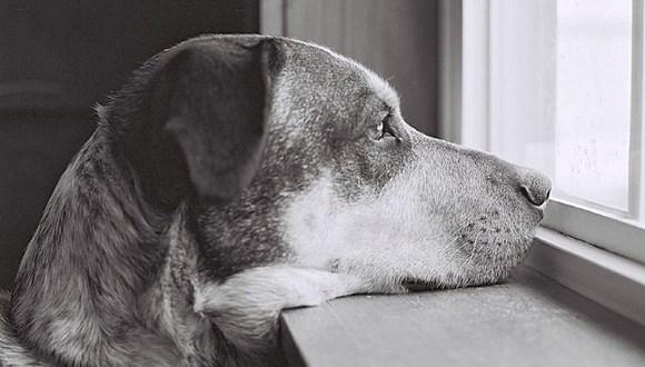 犬 顔認識 thumb