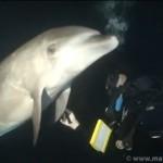 【動画】海の神秘:ダイバーに助けを求めるイルカ