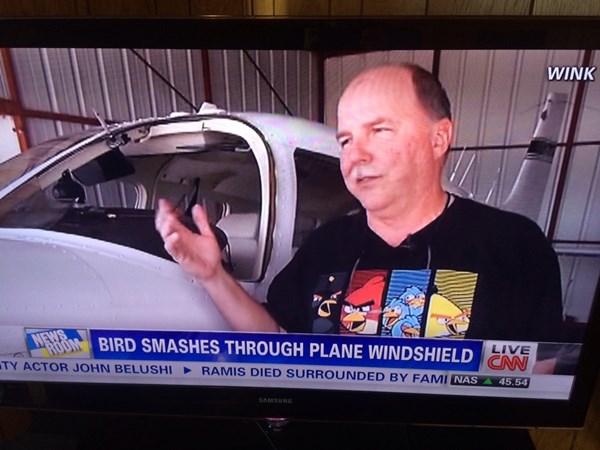 鳥 飛行機 フロントガラス