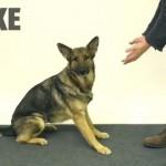 【動画】犬に手品を仕掛けて混乱させまくる