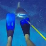 【動画】海底でサメに襲われたダイバー、モリで格闘し無事生還