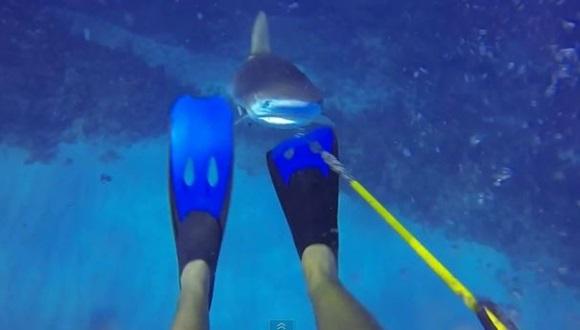 サメに襲われる映像
