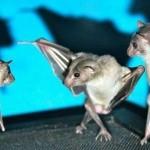 【画像】ぶら下がっているコウモリの写真を逆さまにすると素敵