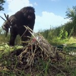 【動画】自分で火を起こしてマシュマロを焼く賢すぎるボノボ