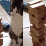 【動画】崩さないようにそーっと…、ジェンガで遊ぶ猫