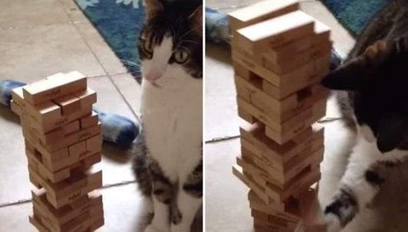 ジェンガ 猫