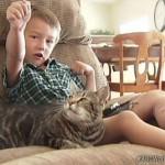 狂犬から少年を救ったヒーロ猫のタラちゃん、米マイナーリーグ野球の始球式に出場決定