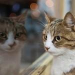ネコたちの目に映る世界を画像でシミュレーション
