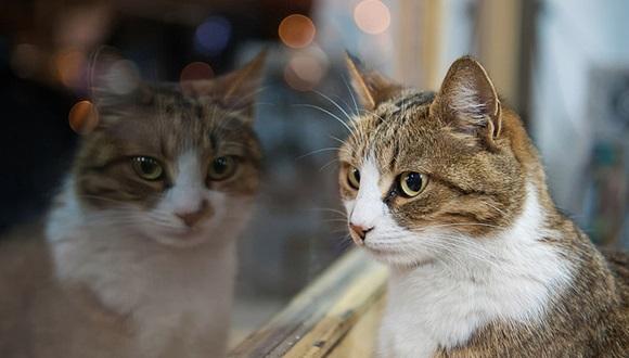 ネコの見え方