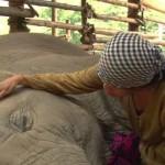 【動画】子守唄を聞きながらスヤスヤと眠るゾウ