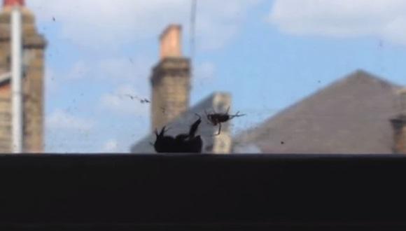 ハチ 仲間意識