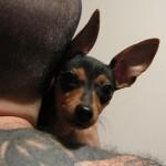 ニューヨーク州、ペットのタトゥーやピアスを違法に