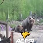 【動画】絶対に小熊を挑発してはいけない理由