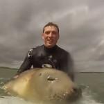【動画】サーフィンに夢中な子供アザラシが微笑ましすぎる!!
