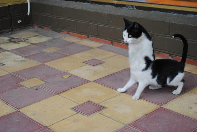 しぃー猫 フォトショ2