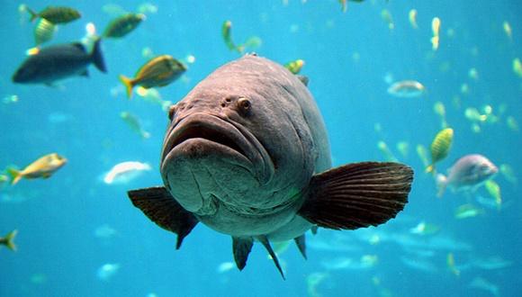 巨大魚イタヤラ