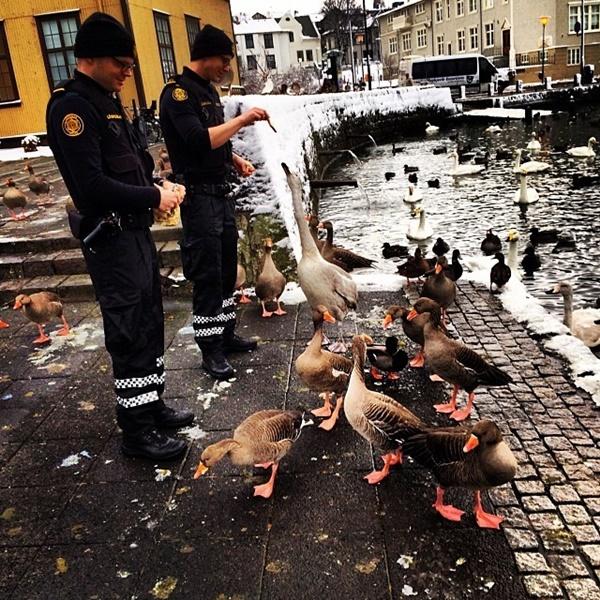 アイスランド警察 9