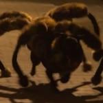 巨大蜘蛛に変身した犬が夜の街を徘徊、鬼畜なイタズラドッキリが大ブレイク中!!