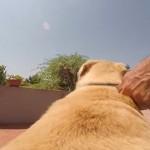 【動画】海に向かって全力疾走でダイブする犬のGoPro映像が大迫力!!