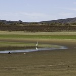 干からびたカリフォルニアの湖から出てきた水中のサプライズ