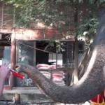 象のピーターとおもちゃのクラリネットでジャムセッション