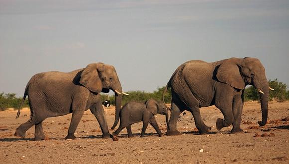 母親ゾウ 子供