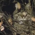 【動画】ロシアの猫救出劇がいろんな意味でひどすぎて笑える