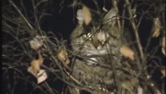 ロシア 猫救出
