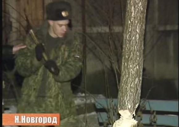 ロシア 猫救出 2