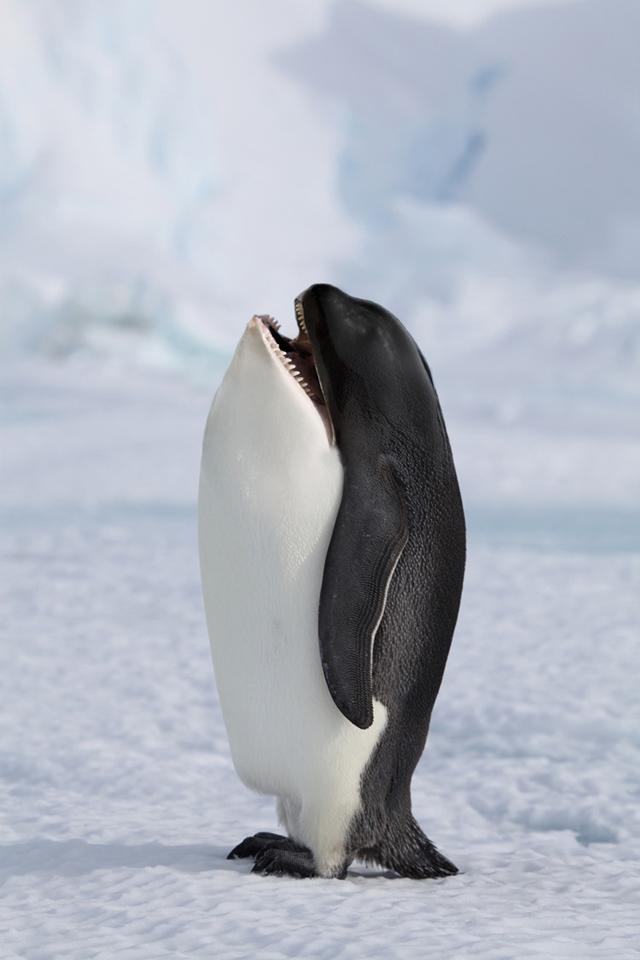 シャチペンギン