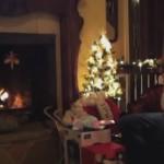 トラウマが生まれる瞬間: かわいい妖精のお友達が火の中にダイブ