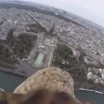 【動画】鷲の目線から見る花の都パリ