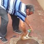【動画】缶から頭が抜けなくなったノラ猫を救出するやさしいオジサンなど