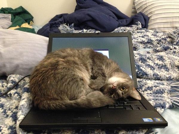 わんぱくすぎる猫2