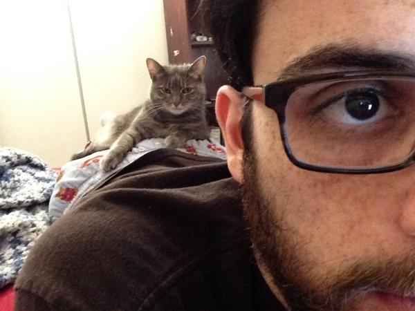 わんぱくすぎる猫7
