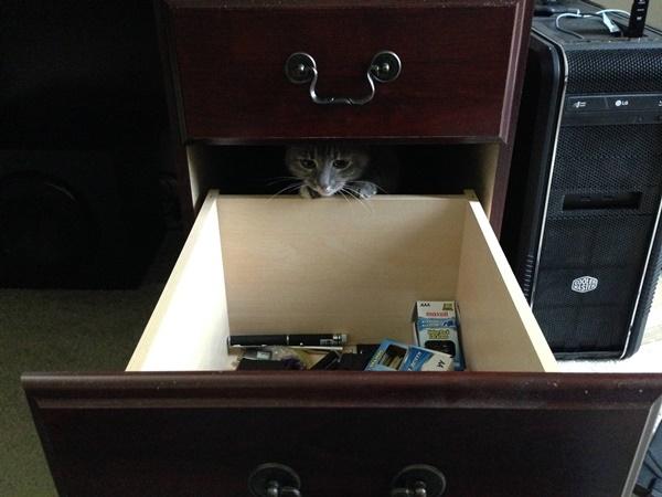 わんぱくすぎる猫