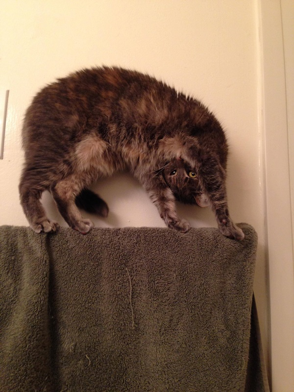 わんぱくすぎる猫4