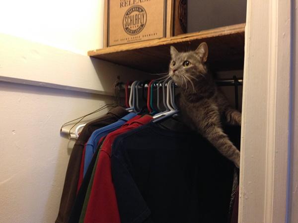 わんぱくすぎる猫1