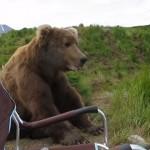 撮影中のカメラマンに巨大なグリズリーが大接近!!熊と遭遇した時の対処法
