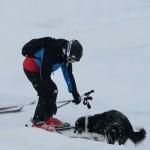 【動画】ゲレンデで見知らぬスキー客に棒投げをおねだりするコリー犬がかわいい