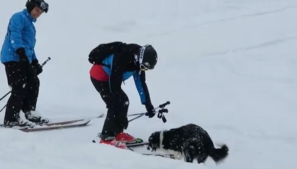 犬 スキー場