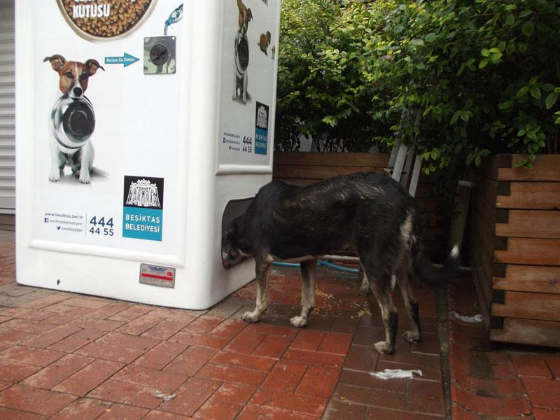 リサイクル 野良犬