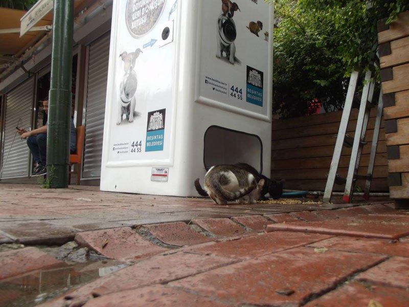 リサイクル 野良犬8