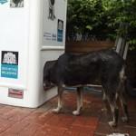 ペットボトルが野良犬・猫のエサに変わる、トルコの路上リサイクリングマシーン