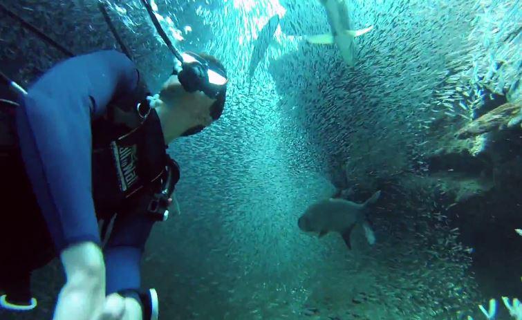 魚のトンネル5