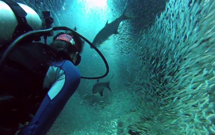 魚のトンネル6