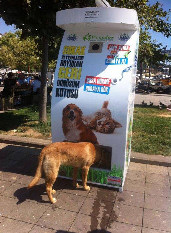リサイクル 野良犬2