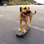 【動画】カリフォルニアのビーチでスケボーを楽しむスケーター犬
