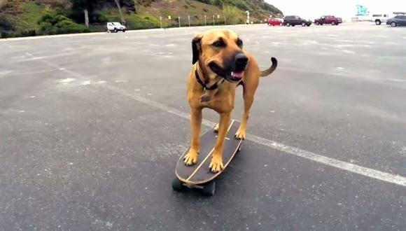 スケボー 犬